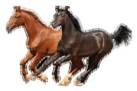 """Képtalálat a következőre: """"horse png"""""""