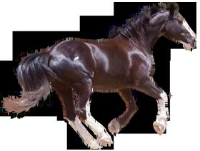 Quarter Horse Running Silhouette
