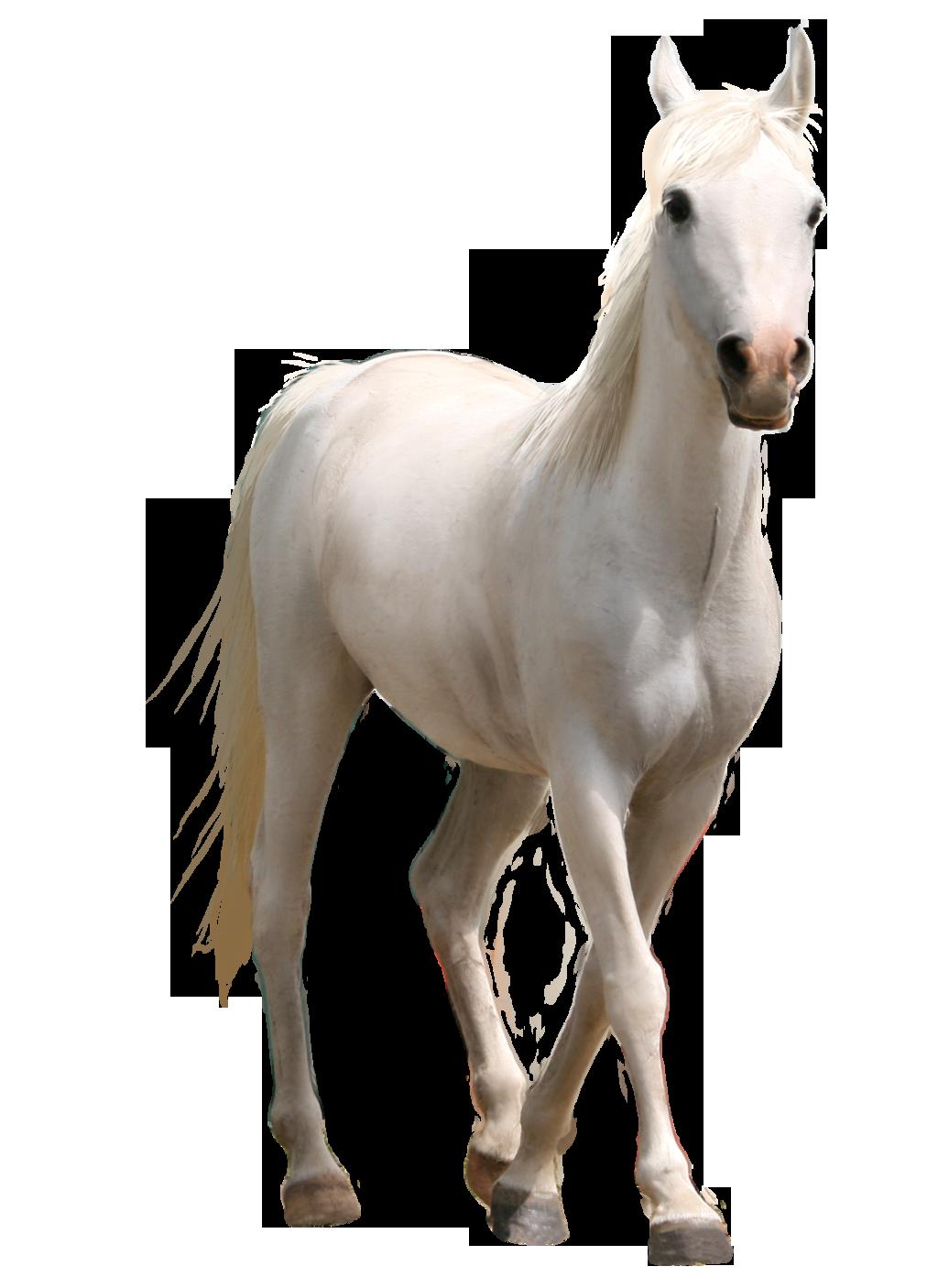 white horse images png flower pot clip art card flower pot clip art pattern