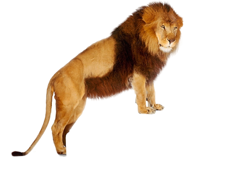 Lion Png Images Download: Lion PNG Images And Clipart Free Download