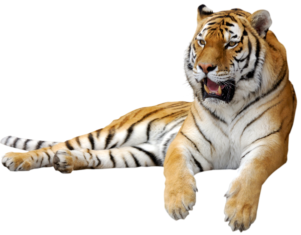 Clipart Of A Tiger Happy Tiger Clipart Tiger Eyes Drawing