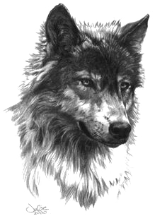 Wolf PNG Transparent 140+ stock images free