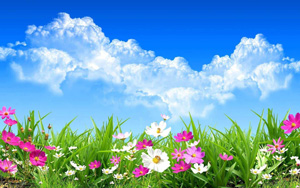 white Cloud with flower Wallpaper