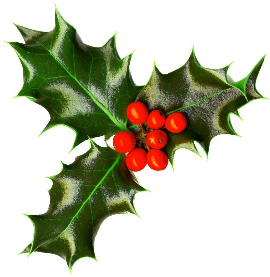 Christmas Holly Png Images Free Download