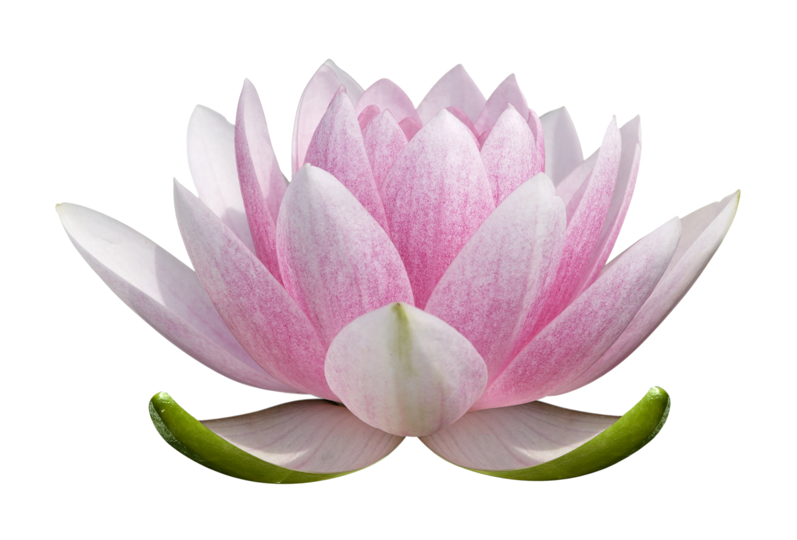 Lotus flower png images free download lotus flower png free png lotus for logo mightylinksfo