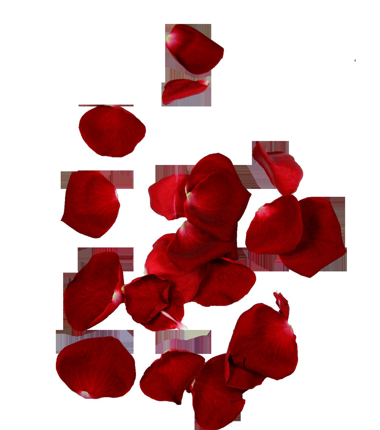 Falling Rose Petals Png, Falling Petals Png HD quality ...