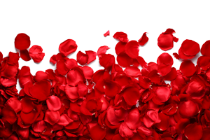 Rose Petals Png images HD quality free download