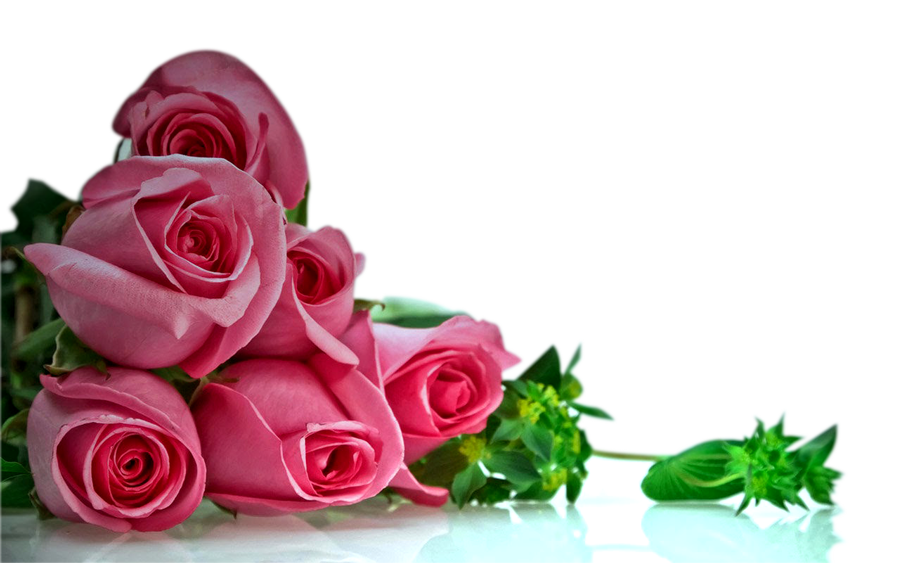 Rose Png Hd Transparent Images Free Download