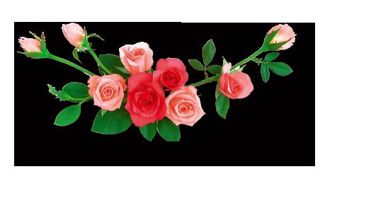 Rose Flower Png Hd Images