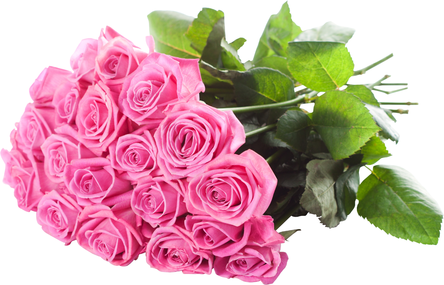 Pink Rose PNG, Psd, Clipart, Transparent