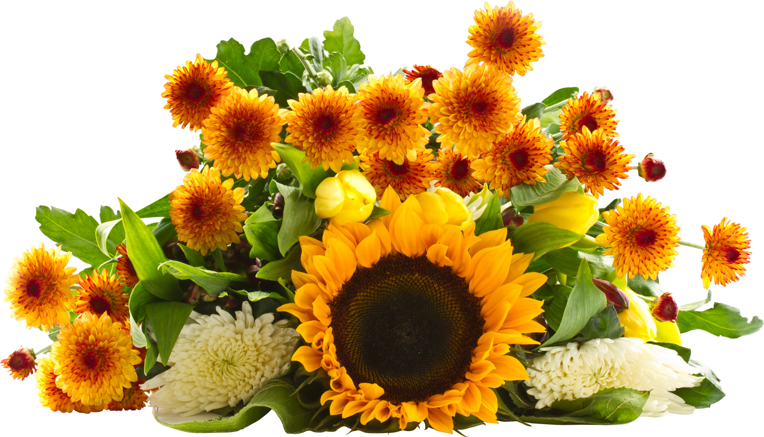 sunflower png images transparent background sunflower clip art borders sunflower clip art pictures