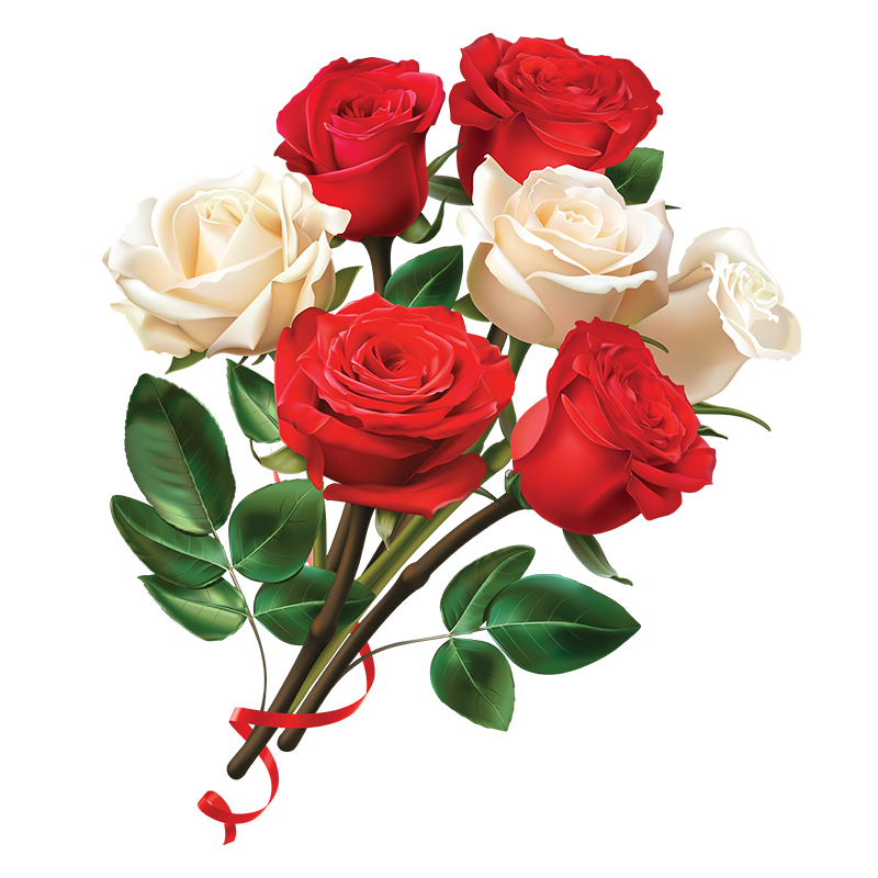 Lovely White Rose Transparent Images Free Download