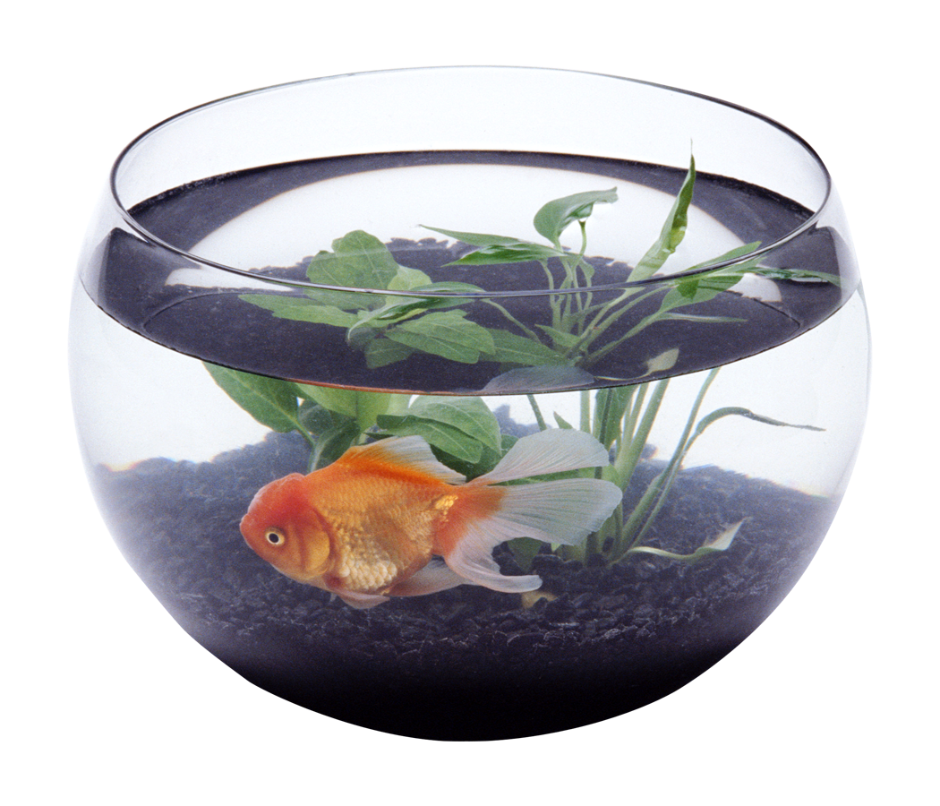 Fish In Bowl Png Photos Free Images Clipart