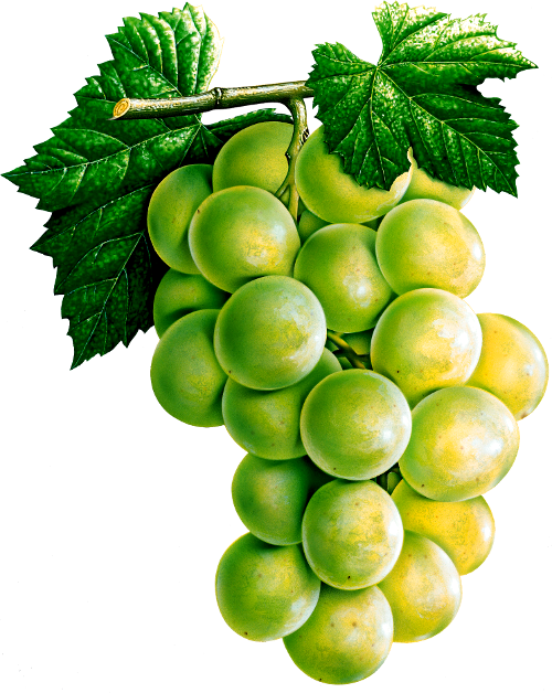 Grape Clipart Png Eleven Image Transparent Background