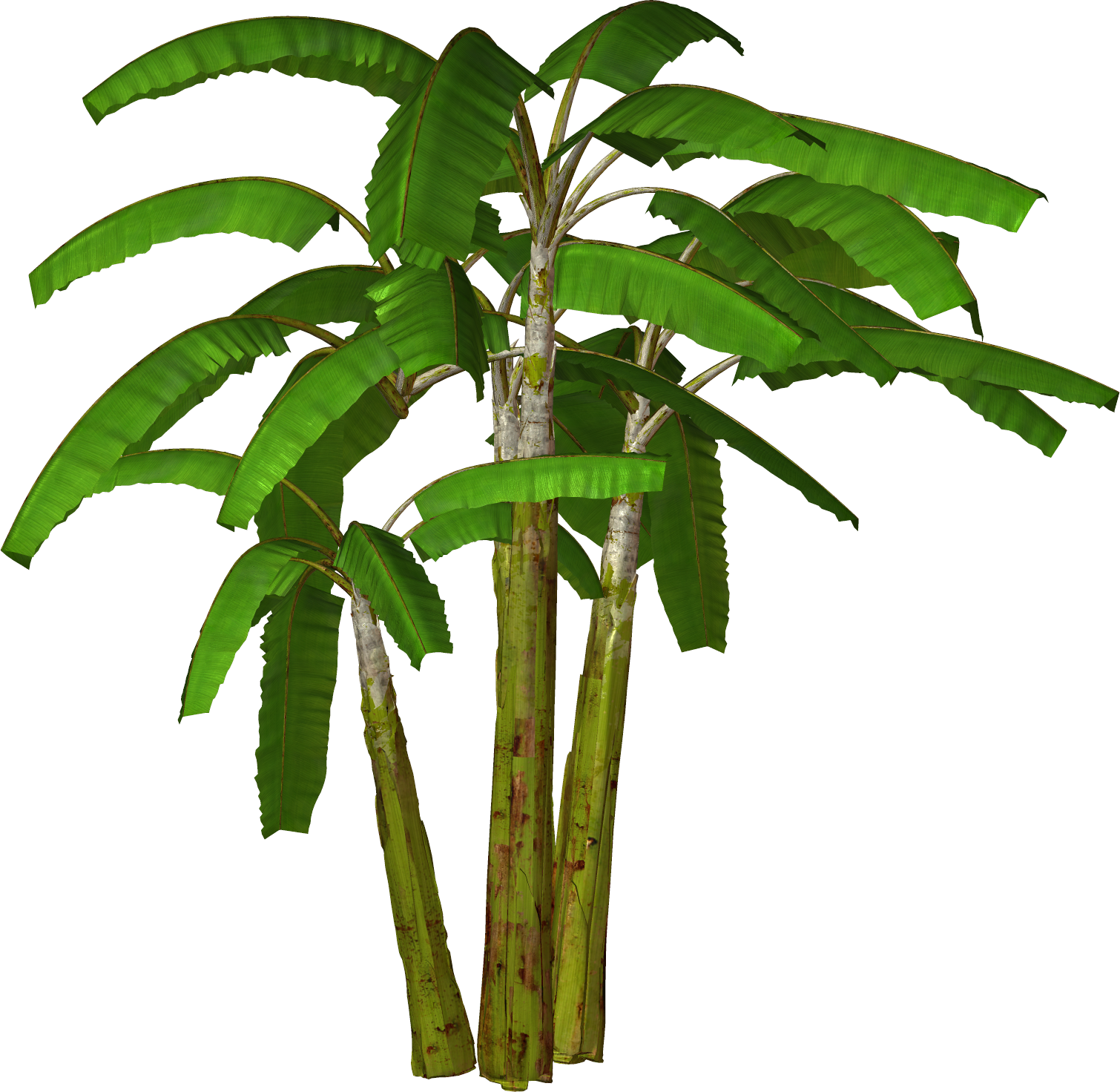Banana Tree Png Photo Transparent Background
