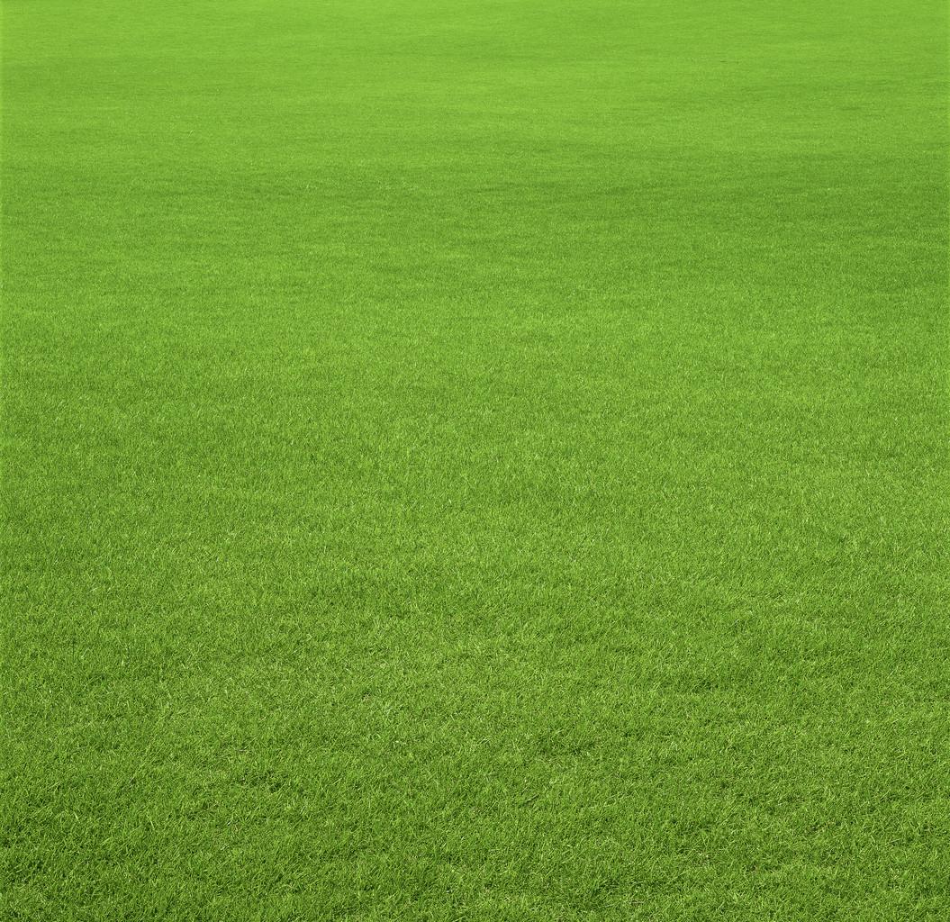 Grass Landscape Grass background flat landscape image workwithnaturefo