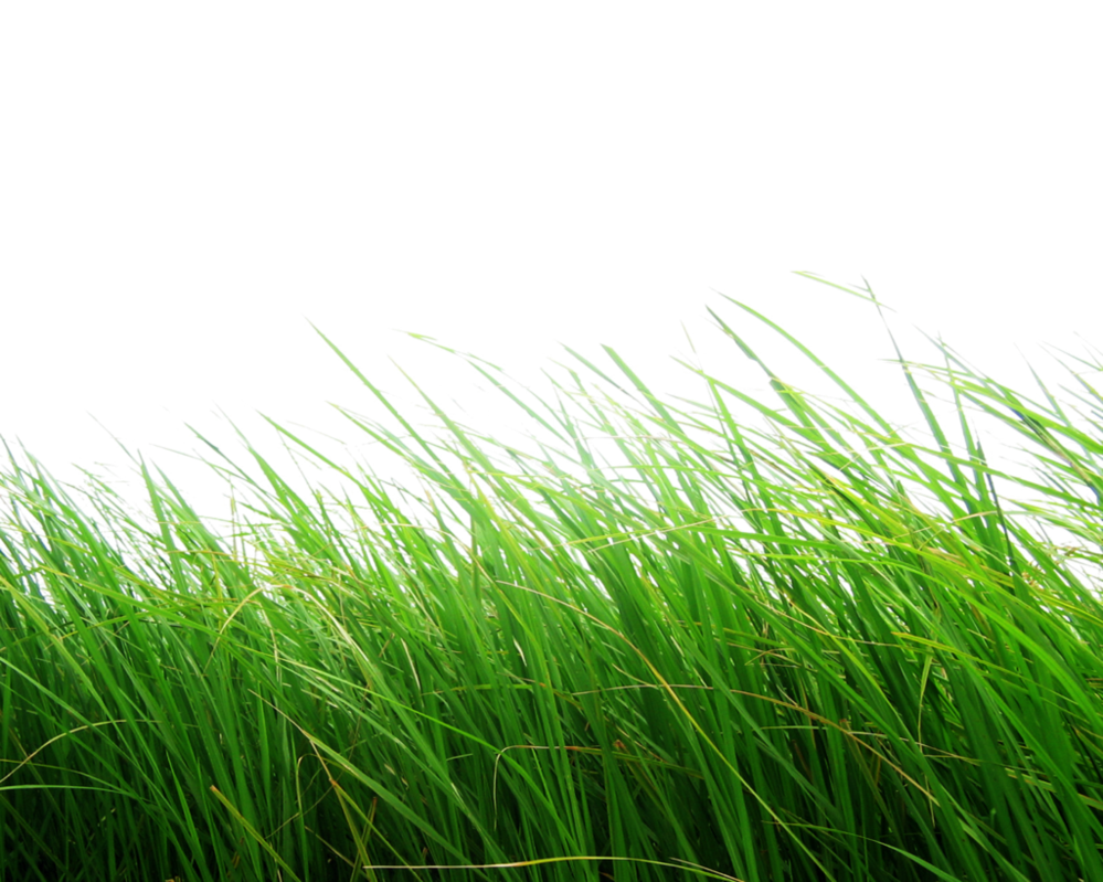 Long grass png image twenty three grass transparent images for Like long grasses