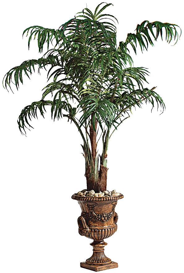 Picture Palm Tree PNG Image Large Size Category Png Format With Alpha Transparent Resolution 999 X 799 927 Kb
