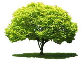 Nature PNG images - Grass png, Leaf png, Tree png free