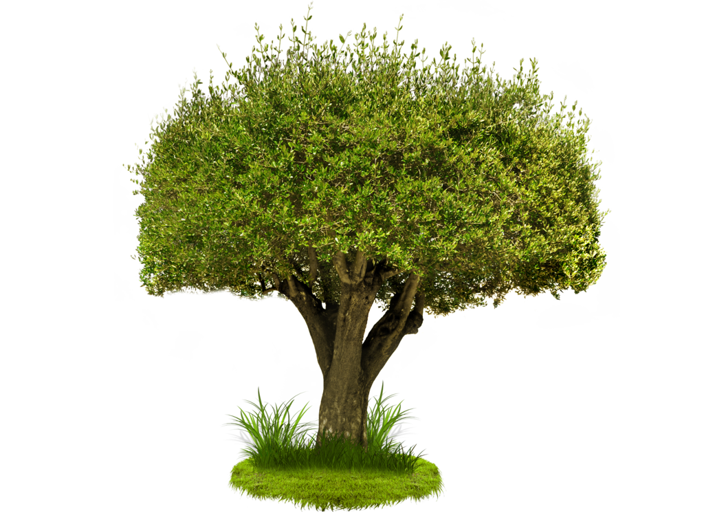 Tree PNG images and Clipart free download