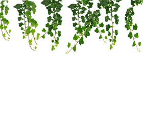 hanging vines leaf png
