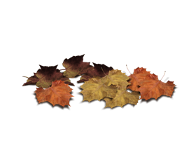 leaf png image fall on land
