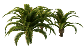 small_palm-tree-png