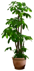 tree-gree-png