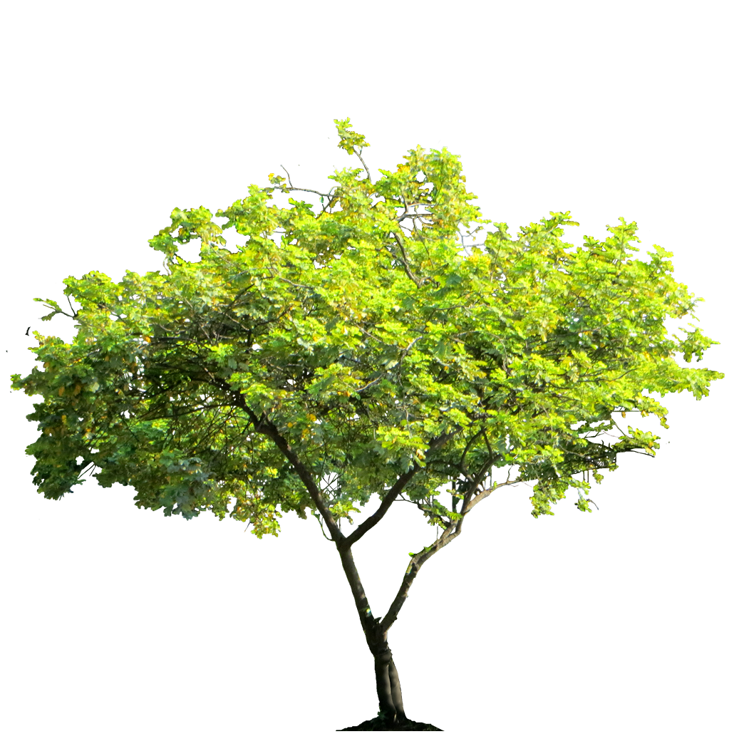 Samll tree png images for Small slender trees