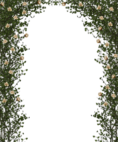 Rose bush frame png image
